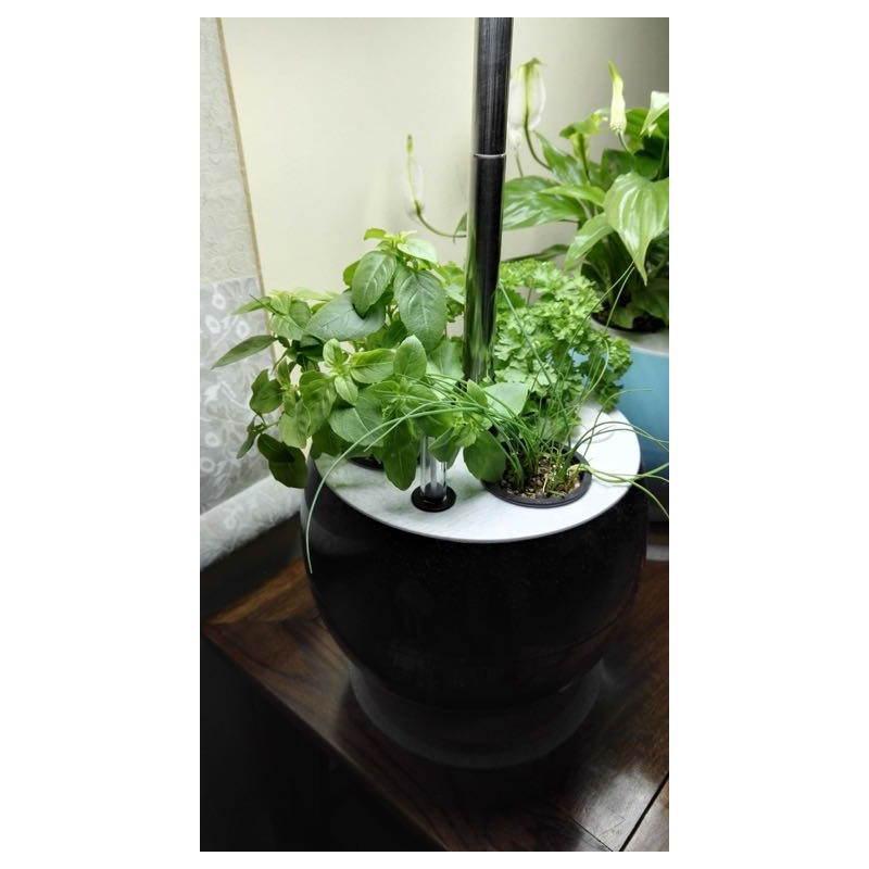 Giardiniere della coltura idroponica per la cultura interna automatica POME (piccolo, nero) - image 23859