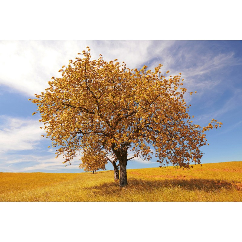 Table on glass ARBRE (120x80 cm) (yellow) - image 43092